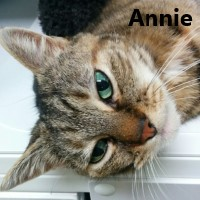 Adopt Oscar and Annie