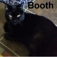 Adopt Booth