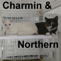 Adopt Charmin and Northern