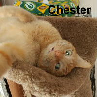 Adopt Chester