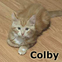 Adopt Colby