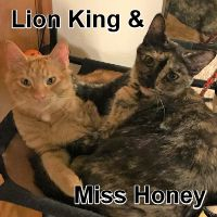 Adopt Lion King and Little Miss Honey