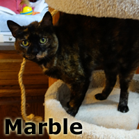 Adopt Marble