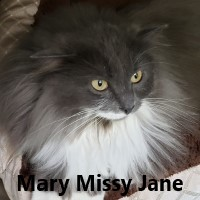 Adopt Mary Missy Jane