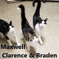 Adopt Maxwell Clarence Braden