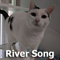 Adopt River Song