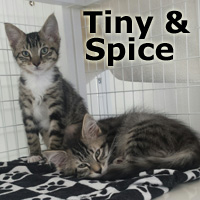 Adopt Tiny and Spice