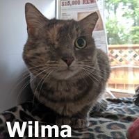 Adopt Wilma